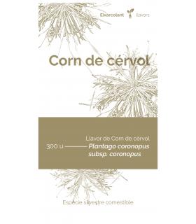 Corn de cérvol (Plantago...