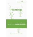 Plantatge (Plantago lanceolata)