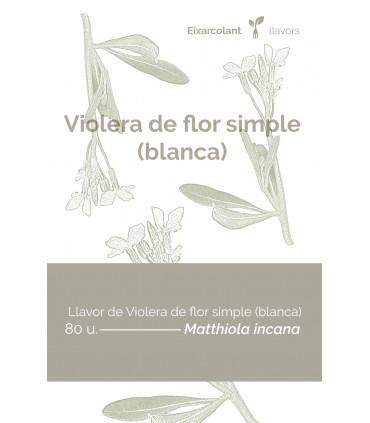 Violera de flor simple blanca (Matthiola incana)